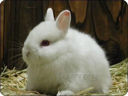 肥肥兔可爱的图片